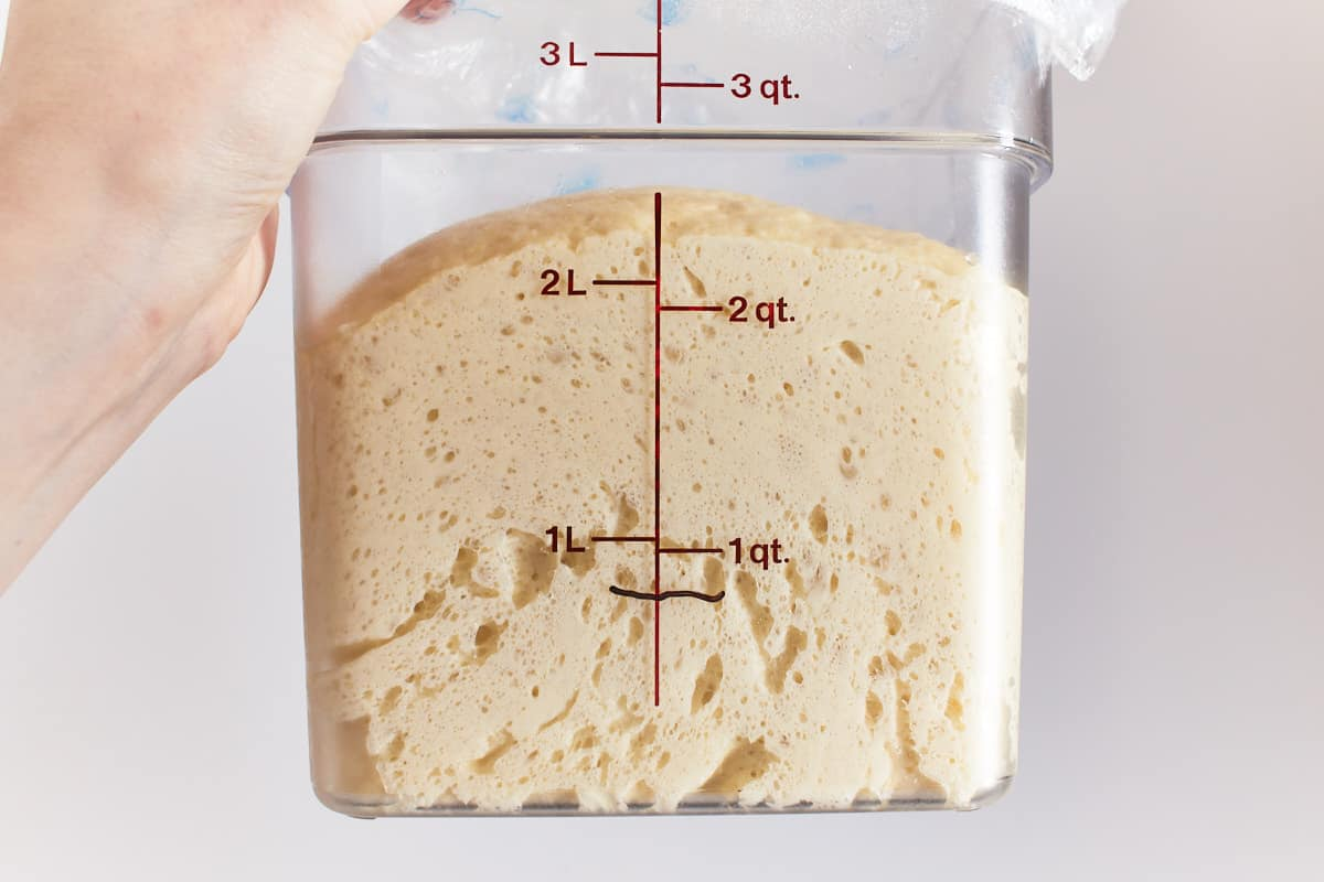 Risen dough in a container