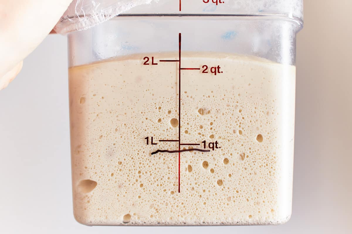 Risen dough in a straight sided container that has more than doubled